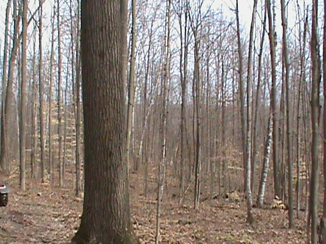 Greater Michigan Timber Management - Frequently Asked Questions Concerning a Timber Harvest